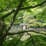 Jardin à Kyoto