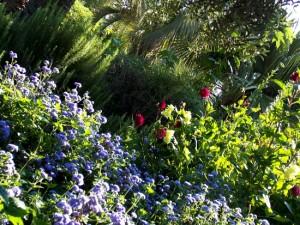 Jardin botanique Marimurtra